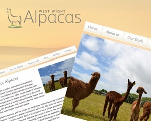 West Wight Alpacas profile banner